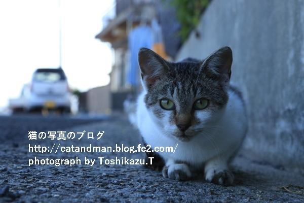 IMG_0609s.jpg