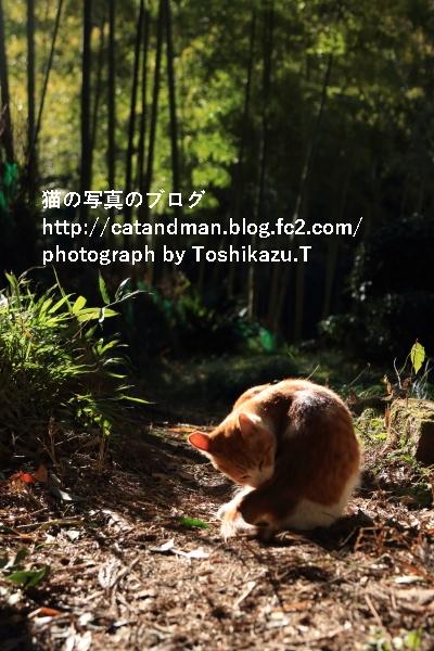 IMG_28010s.jpg