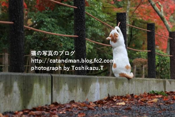 IMG_3036s.jpg