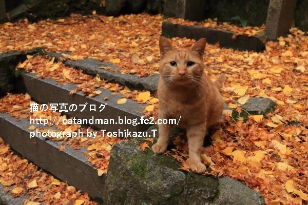 IMG_3831s.jpg