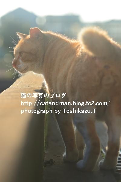 IMG_4447s.jpg