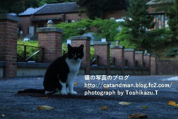 IMG_4575s.jpg