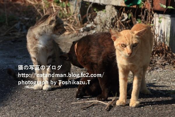 IMG_7041s.jpg
