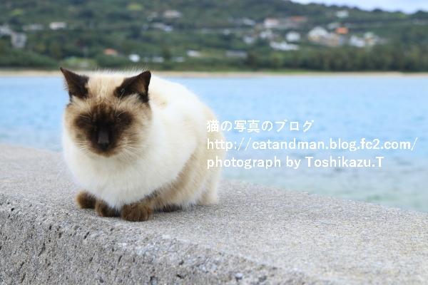 IMG_9558s.jpg