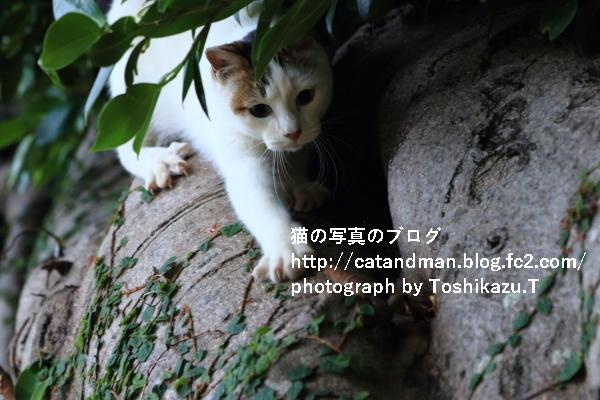 IMG_9727s.jpg