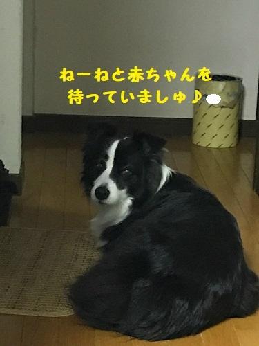 s-IMG_2987_5.jpg