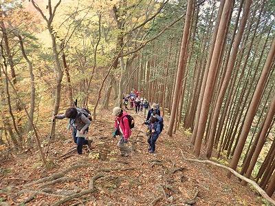20181104鳴虫山 (3)