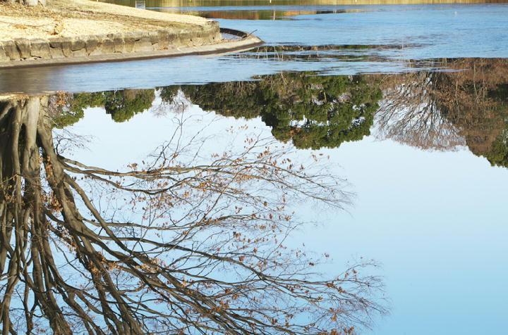 昭和記念公園水鳥の池-090