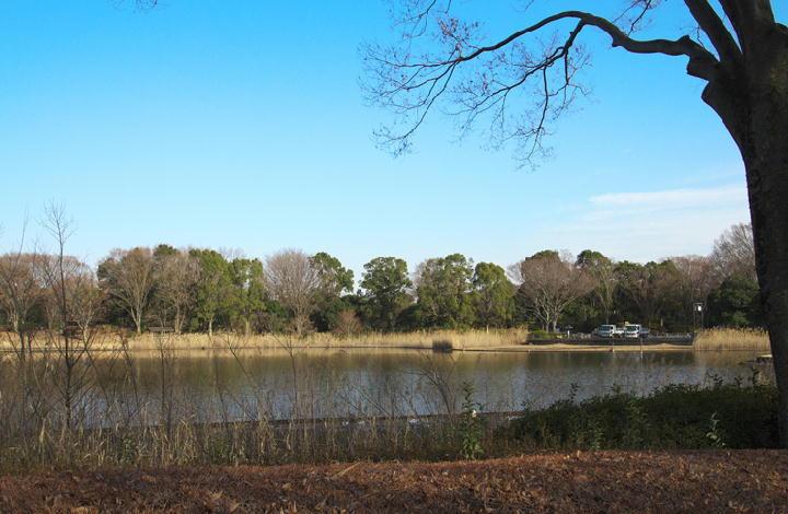 水鳥の池 162