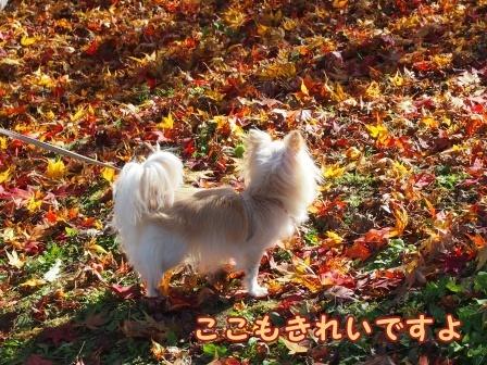 blogb128a.jpg