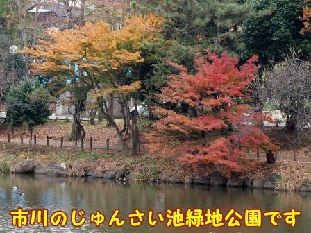 junsai1801.jpg