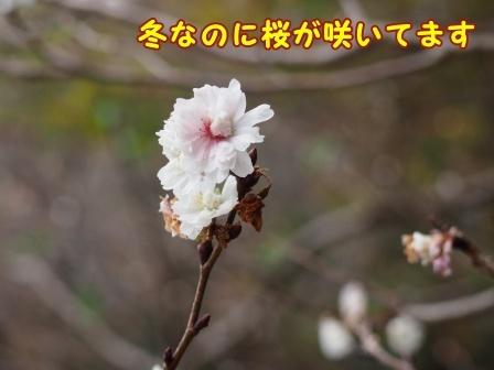 junsai1804.jpg