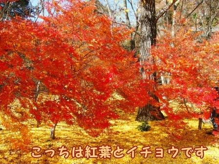 omachi11a.jpg