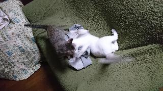 チャーリー&子猫2月13日11