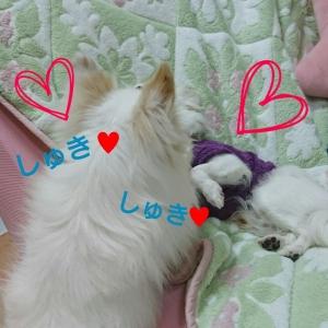 りうっきゅ6