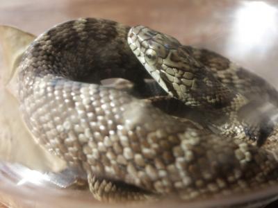 181019-23=◆の幼蛇 aPBR