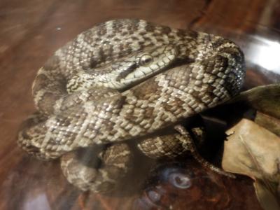 181019-24=◆の幼蛇 aPBR