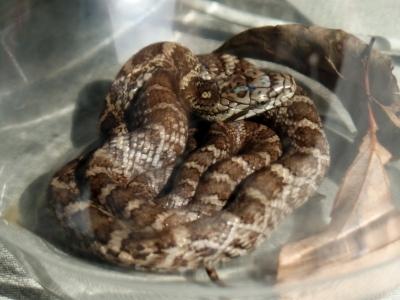181019-27=◆の幼蛇 aPBR