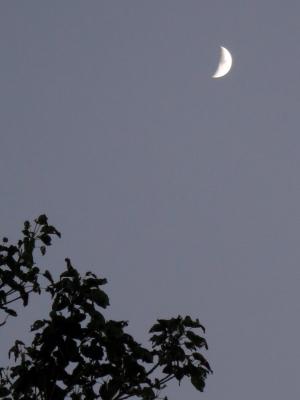 181114-3=上弦の月