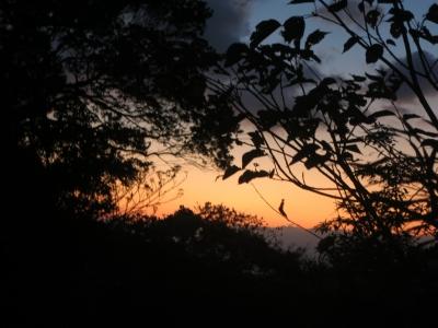 190103-1=夕焼けと木々のシルエットfm用水道入口上