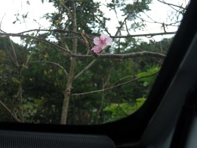 190104-12=狂い咲きサクラfmONA温泉駐車場NPB車内