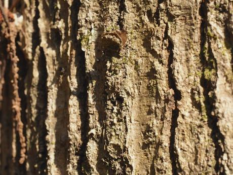 キノボリトタテグモ空き巣
