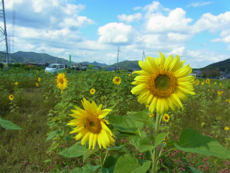 syukusyo-RIMG1706.jpg
