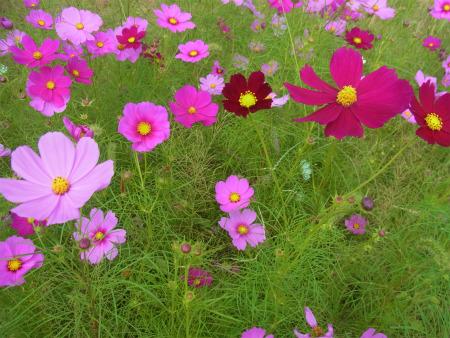 syukusyo-RIMG1710.jpg