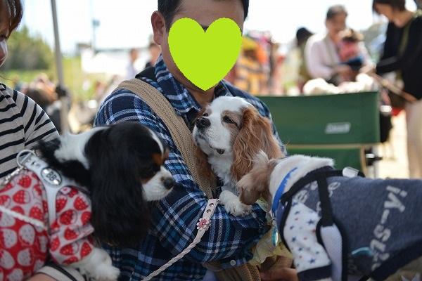 犬のじゅうたんフェスタ2018デジイチ 077