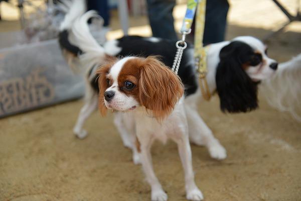 犬のじゅうたんフェスタ2018デジイチ 086