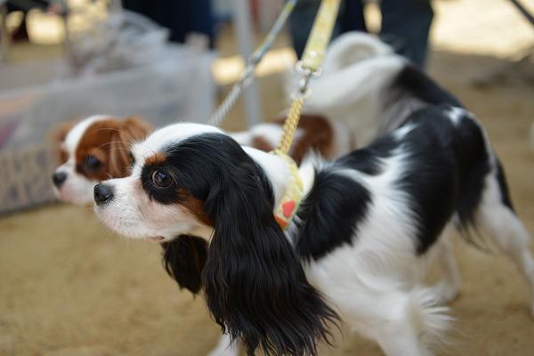 犬のじゅうたんフェスタ2018デジイチ 088