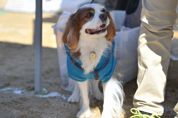 犬のじゅうたんフェスタ2018デジイチ 041