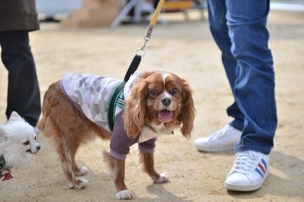 犬のじゅうたんフェスタ2018デジイチ 066