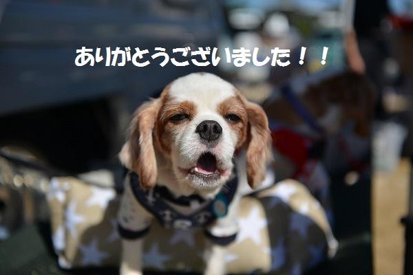 犬のじゅうたんフェスタ2018デジイチ 023