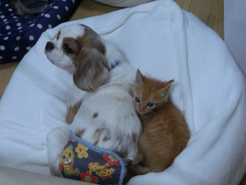 ナッティーと子猫ちゃん 002