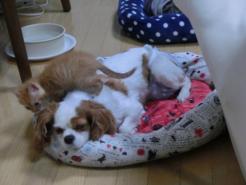 ココと子猫 004