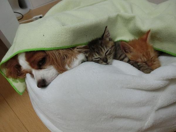 アポちゃんと子猫のラブラブタイム 012
