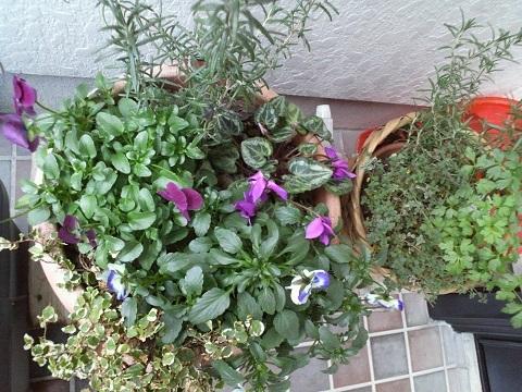 1月の寄せ植え鉢は花数が少なくなる