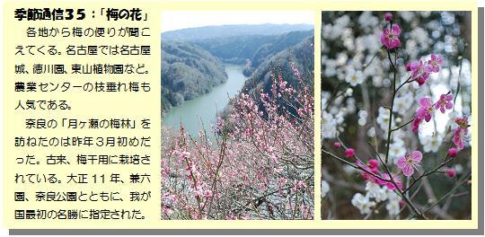 季節通信35梅の花