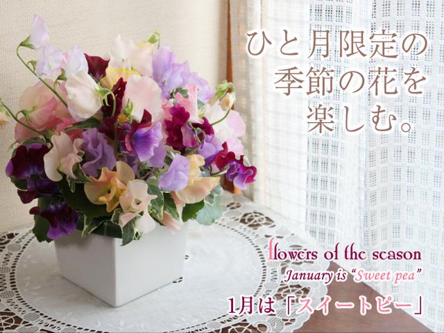 スイートピー 誕生日 サプライズ アレンジ パステル 春 結婚式