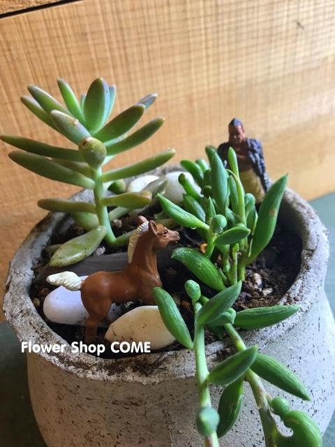 多肉植物 インテリア 観葉 プレゼント おしゃれ 鉢植え