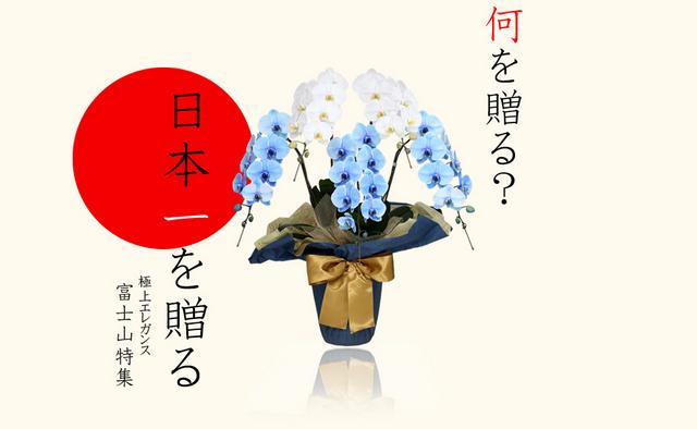 富士山 胡蝶蘭 元旦 新年 お年賀 縁起 青