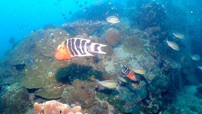 タオ島 ウミウシ