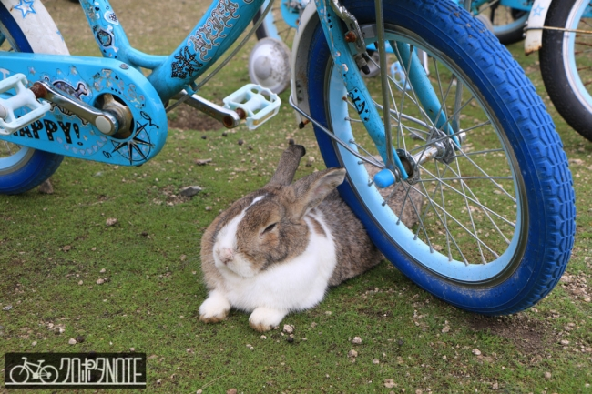 自転車とウサギ