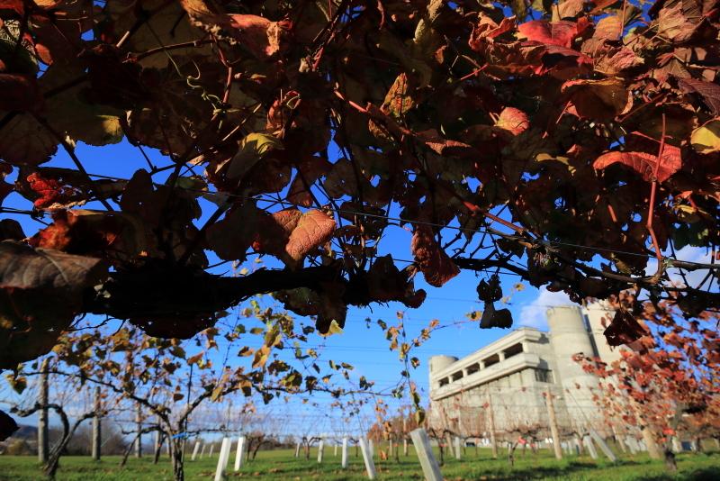 018A7934 池田のワイン城