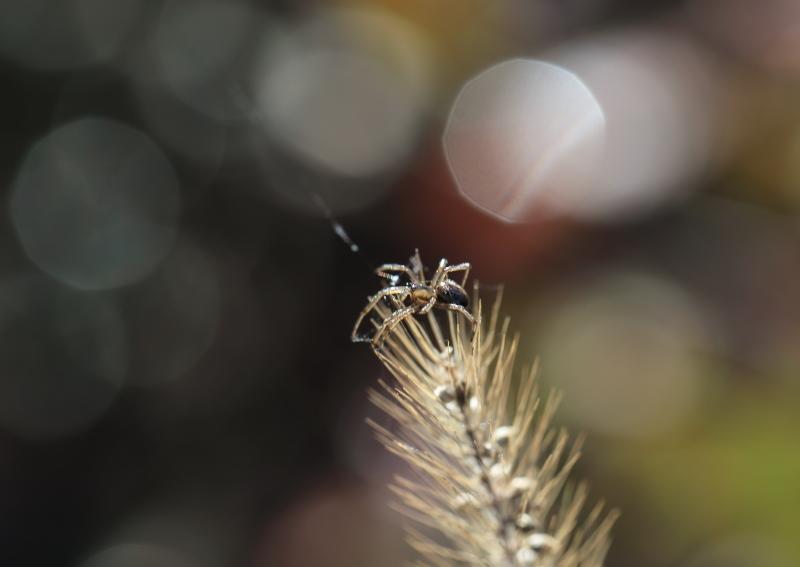 018A8034 蜘蛛のフリーズ