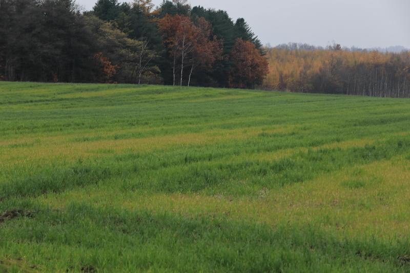 018A8155 牧草畑