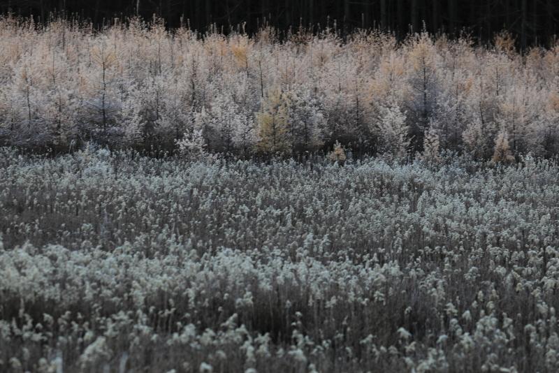 018A8407 霜が降りた朝