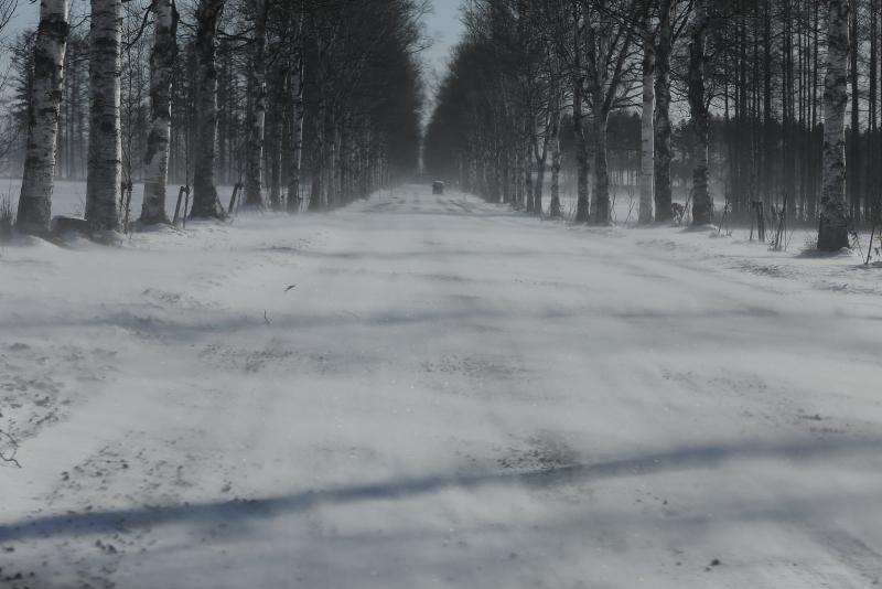 9862 白樺並木の地吹雪