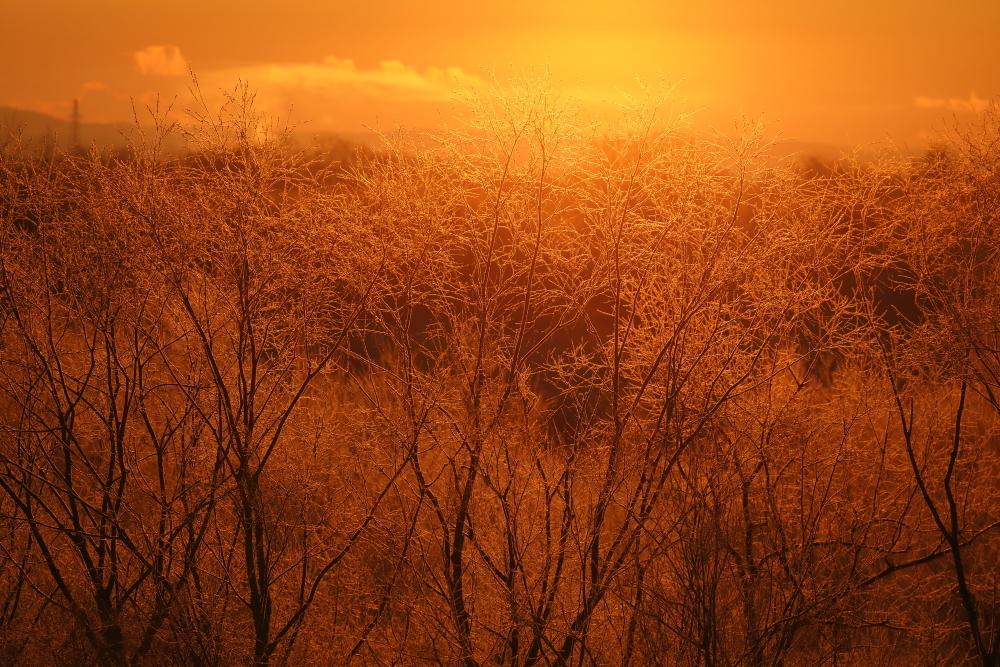 1892 染まる霧氷